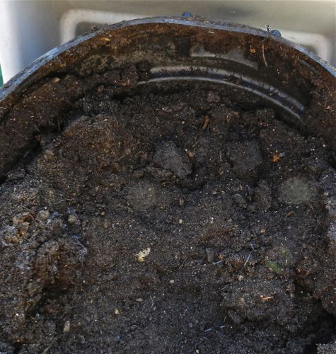this manure is very rich and high in nitrogen and calcium itu0027s terrific straight on my bare pumpkin patch that has anemic soil and mixed into the dirt of - Chicken Manure
