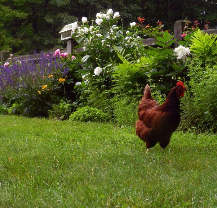 Image result for chicken manure plant