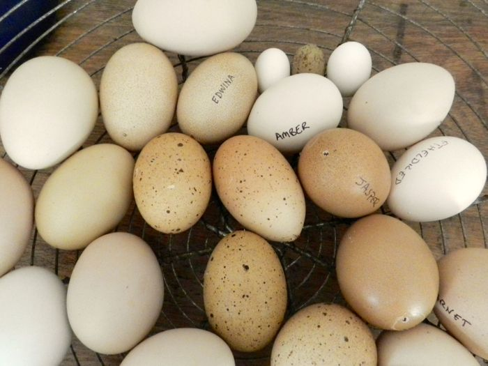 displayed eggs