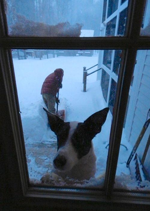 Lily at door