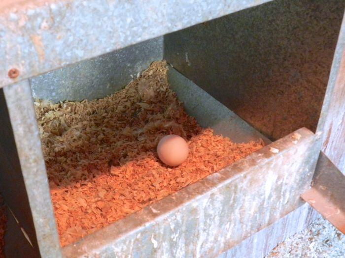 nesting box egg