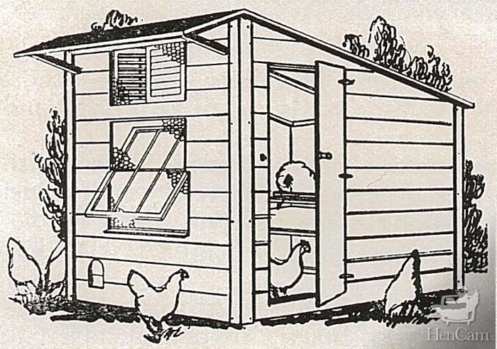 Chicken Coop Dimensions And Design Criteria HenCam