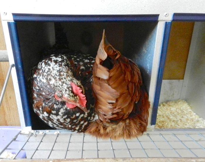 nesting box jam