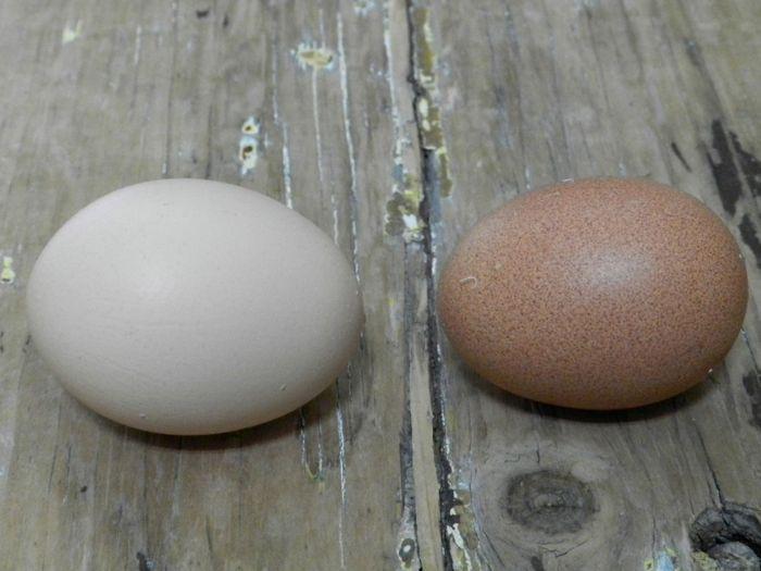 RIR eggs