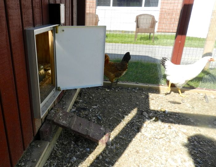 Delightful You Can Select A Right Or Left Opening Door. I Ordered The Wrong One, Which  Will Be Replaced, So That The View Of The Chicken Ramp Isnu0027t Blocked.