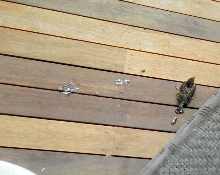 on porch