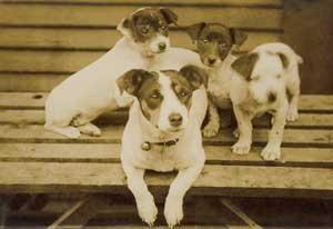 DogPostcardBook-329