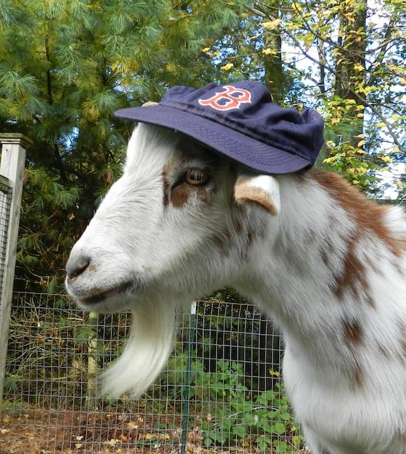 caper in hat