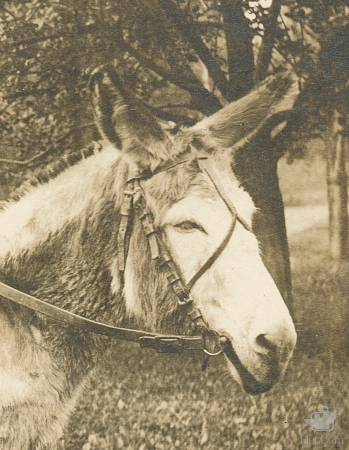 woman_riding_donkey - Version 2
