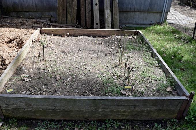 ignored garden