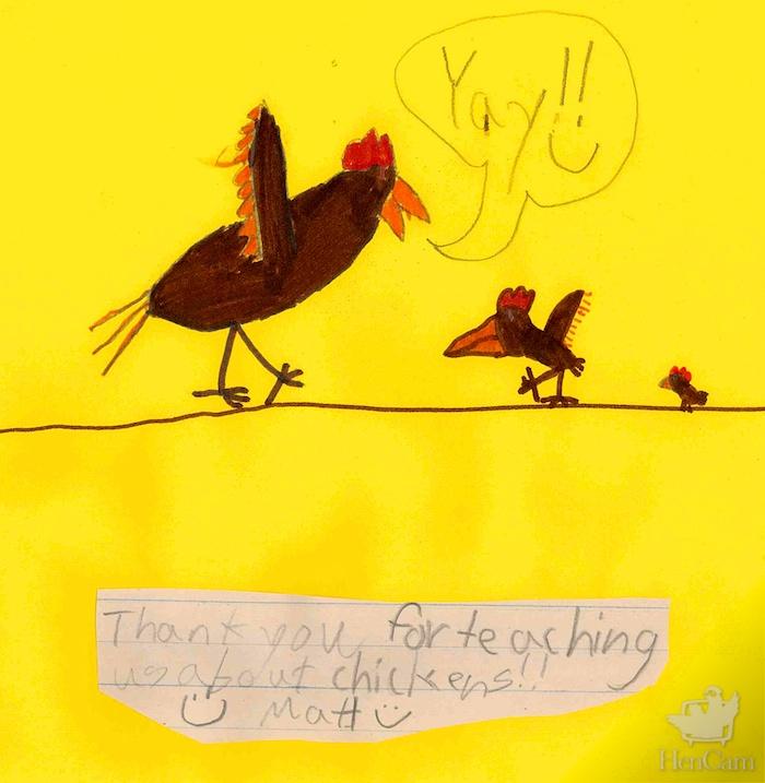kids_chicken