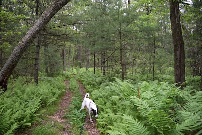 Lily in woods
