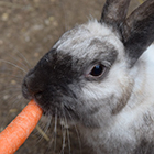 P-and-carrot-square