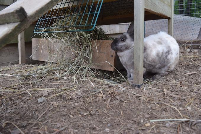 hay nest