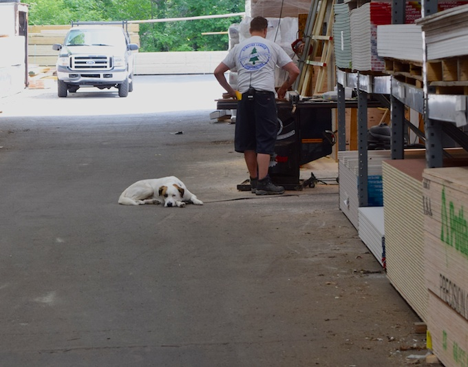 lumber yard dog