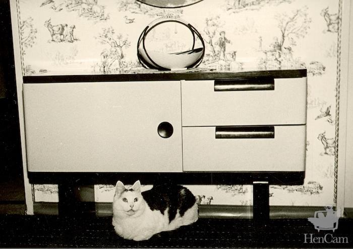 mid-c cat
