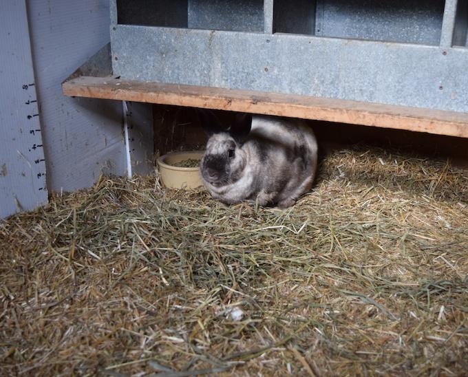 under nest box