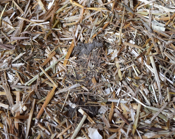 dry manure