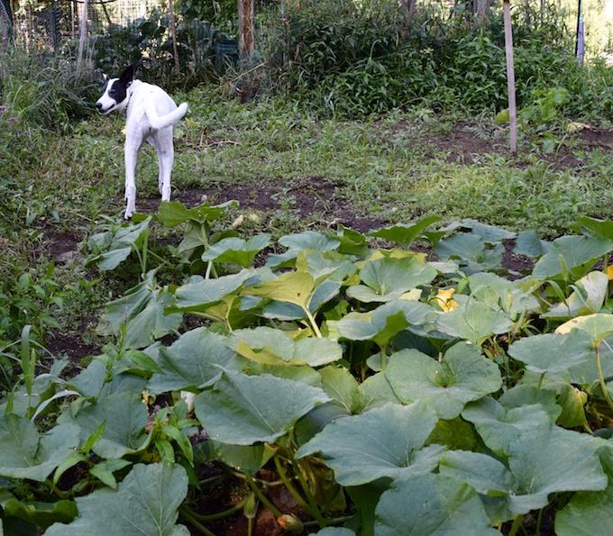 lily on patrol