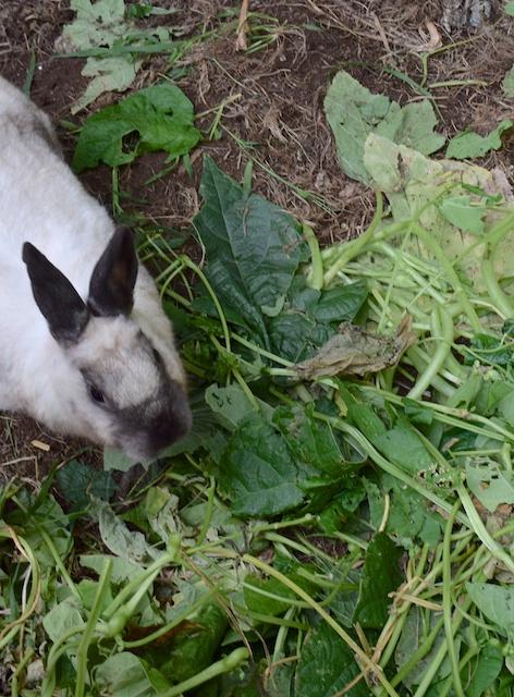 Phoebe eats