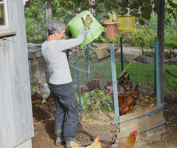 greens for chickens
