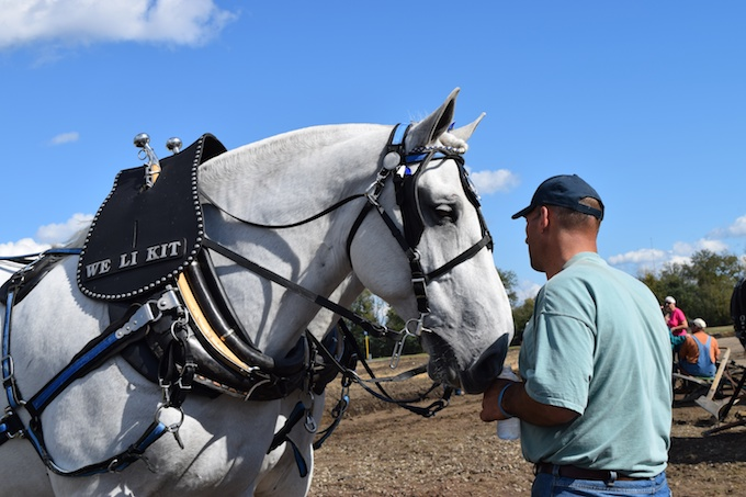 Percheron and plowman