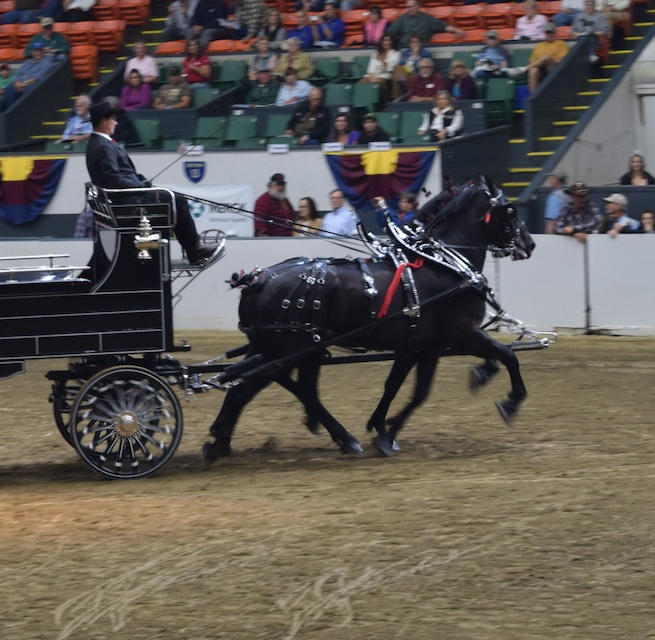 Percheron two horse