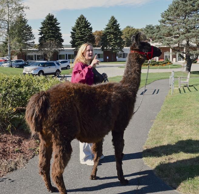 llama handler