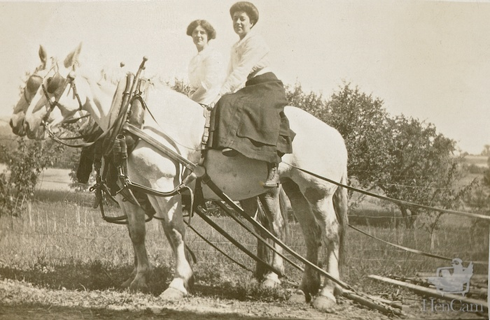 women on draft horses