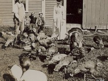 vintage turkey farm