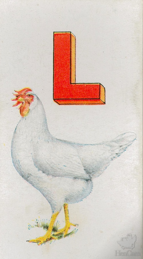 L for leghorn