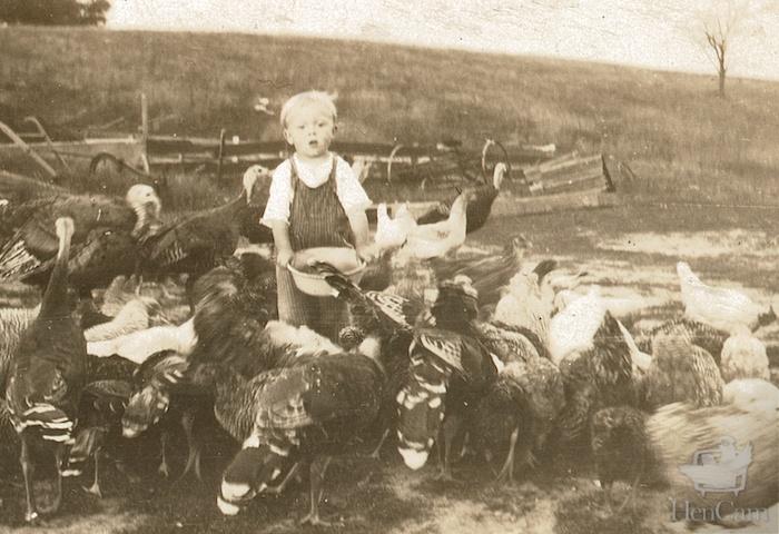 boy feeding poultry