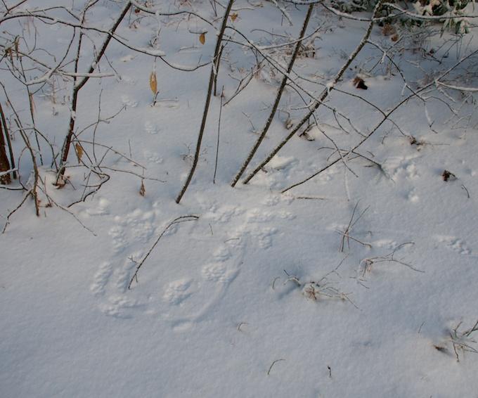 fisher cat circles