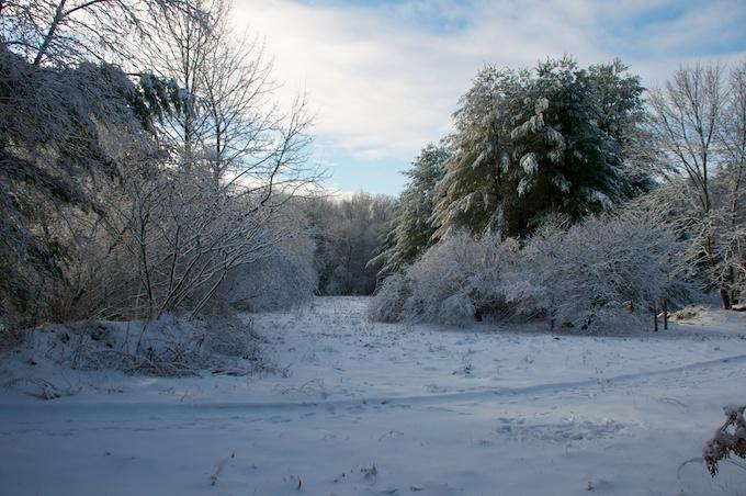 snow in meadow