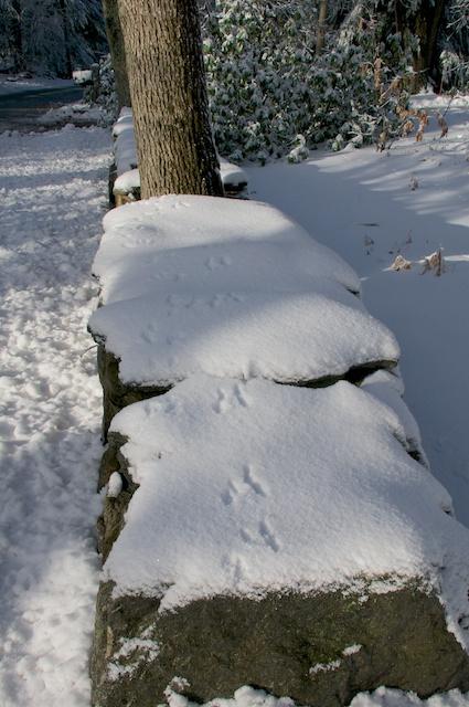 tracks on stone wall