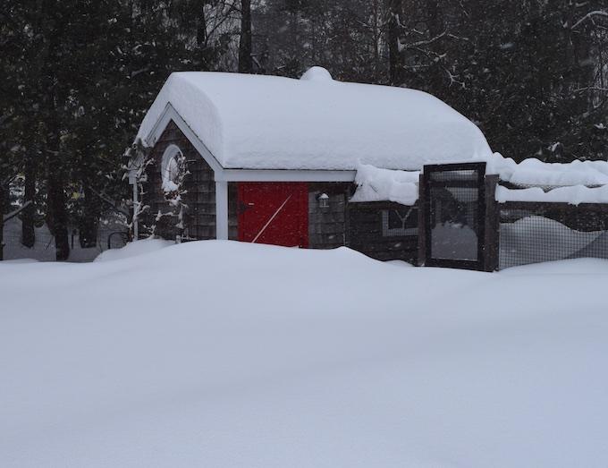 snow on coop