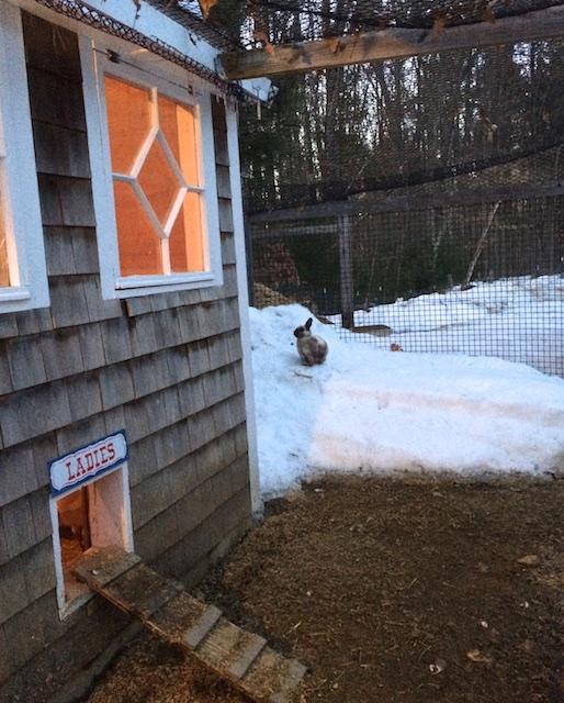 rabbit on snowmound