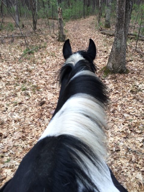 horse on trail