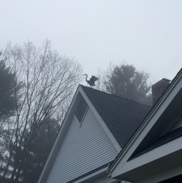 heron on roof