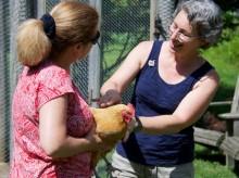 hold a chicken