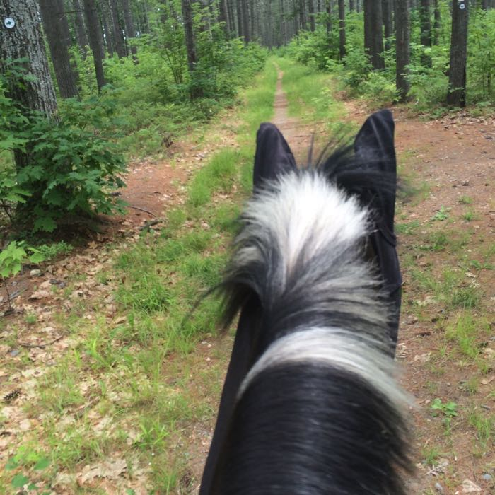 Town forest ride