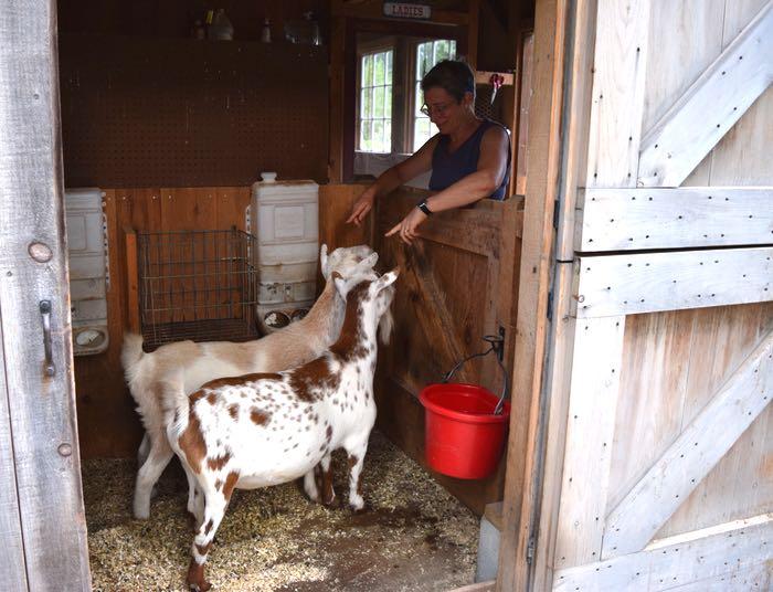 goats back