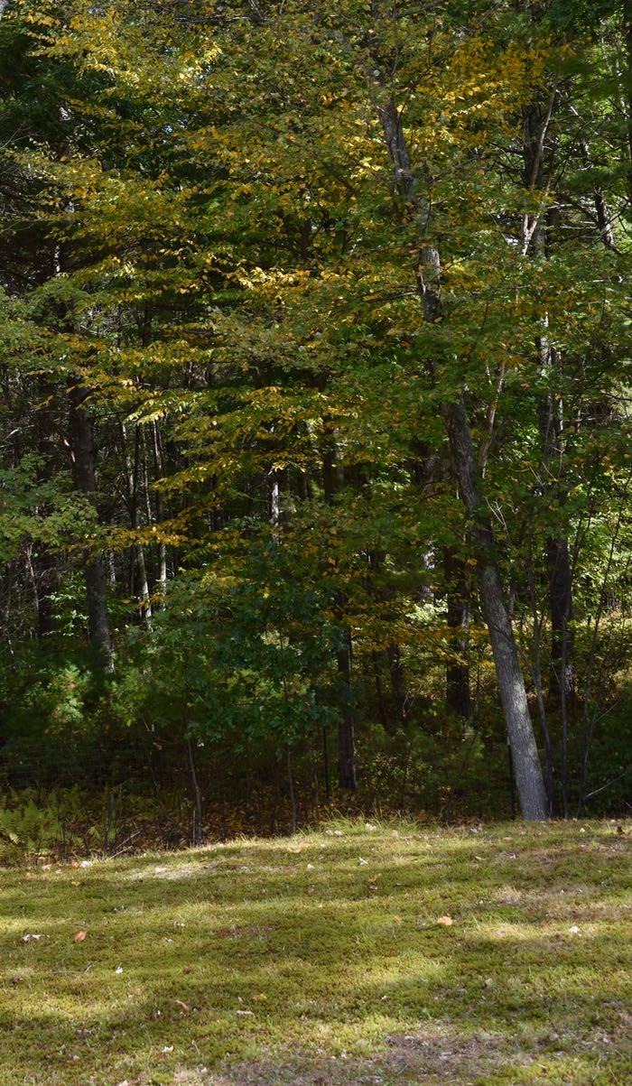 yellow in woods