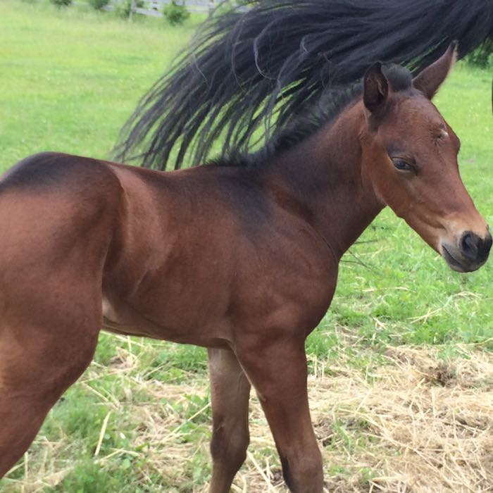 relaxed foal