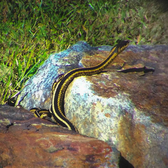 snakes_together