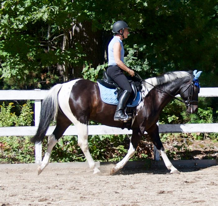 working trot sept2015