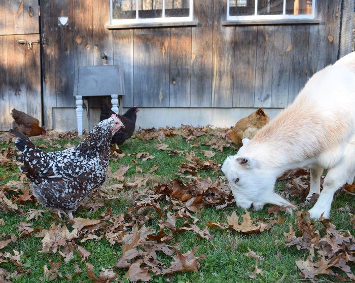 Agatha and Pip
