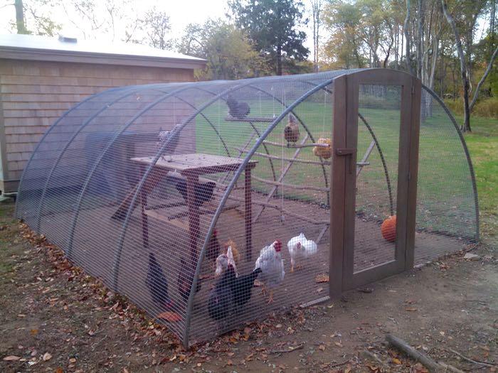 Chicken Coop Design Hencam