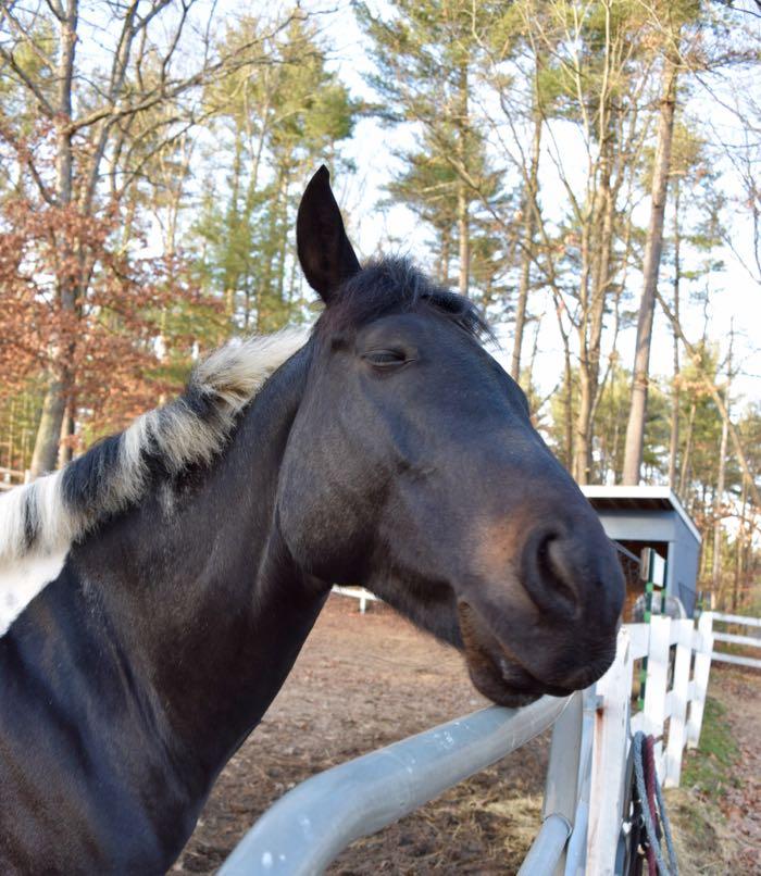 smug horse