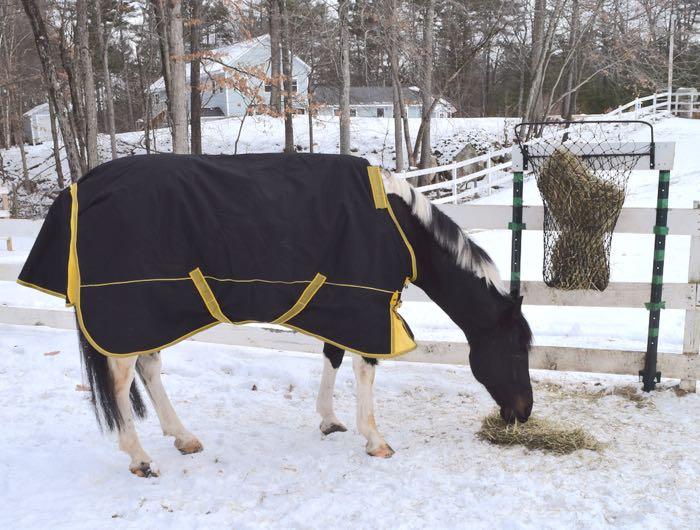 horse winter blanket